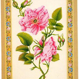 016 1 300x300 - تصویر باکیفیت گل و مرغ