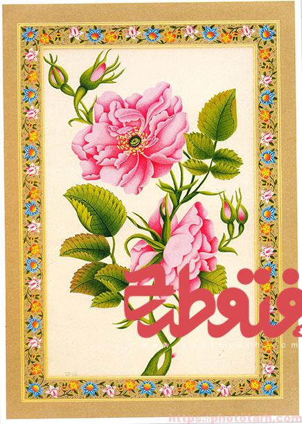 016 1 - تصویر باکیفیت گل و مرغ